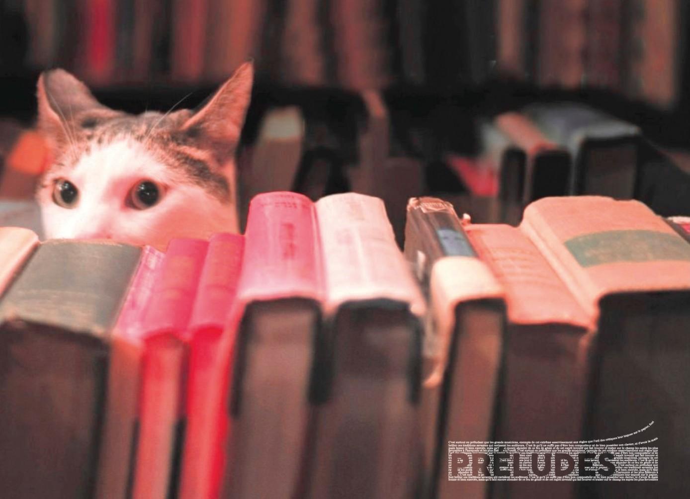 Le cœur entre les pages