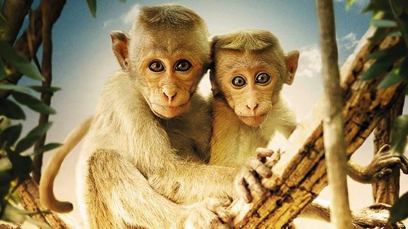 au royaume des singes_2